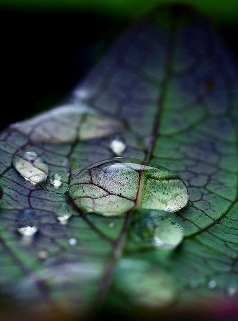 leaf-water drop