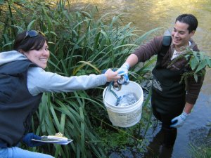 stream-cleanup-teamwork