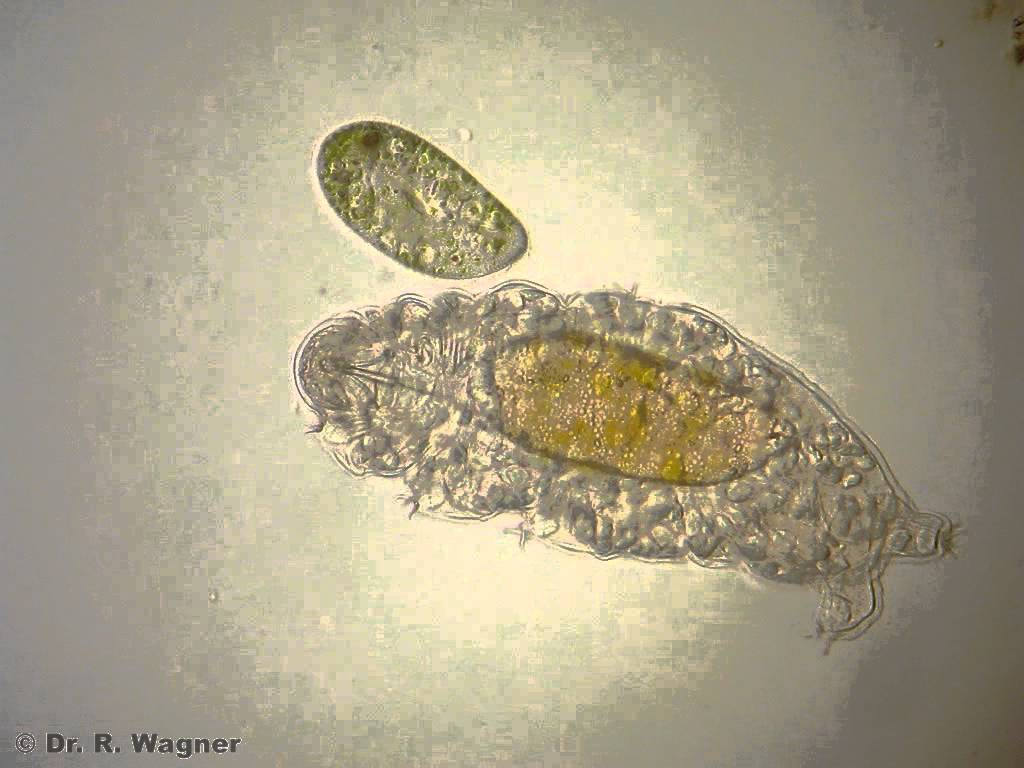 water and life  part 1  microscopic aquatic life  u2013 the