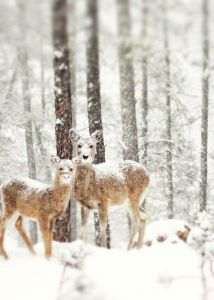 deer-snow on noses