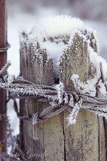 snow on fencepost