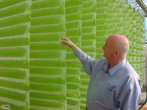 algae-fuel01