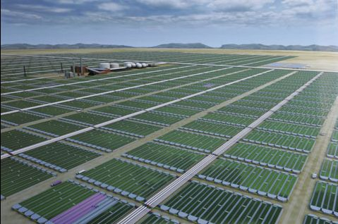 algae-fuel03