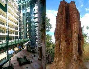 eastgate zimbabwe-termite mound