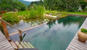 NSP-biotope pool austria