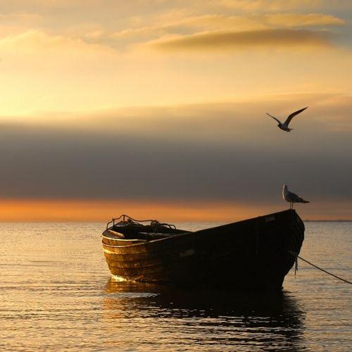boat sunset birds