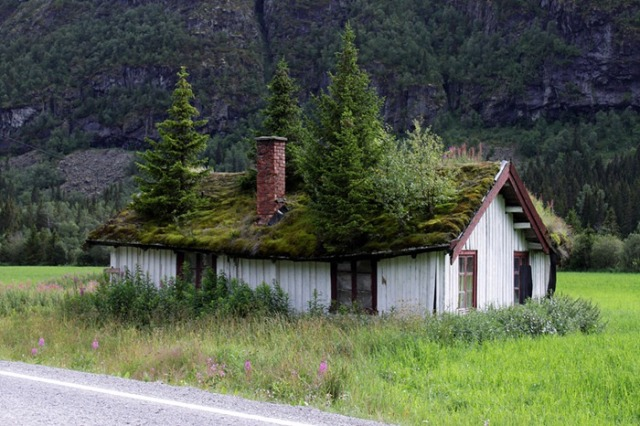 green-roof-norway-1