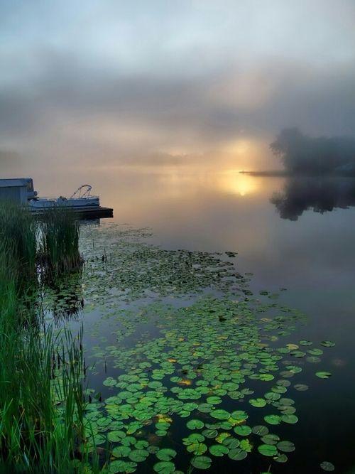 pond lilies2