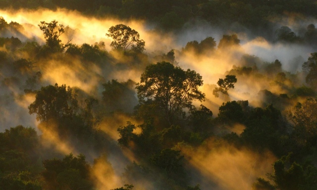 Rainforest in the mist of Brazil