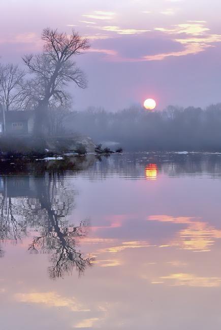 tree sun water