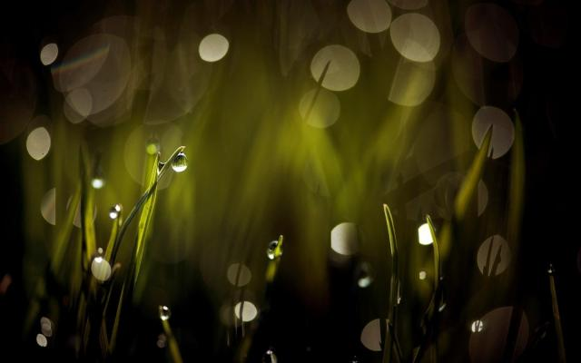 water droplets on grass leaves