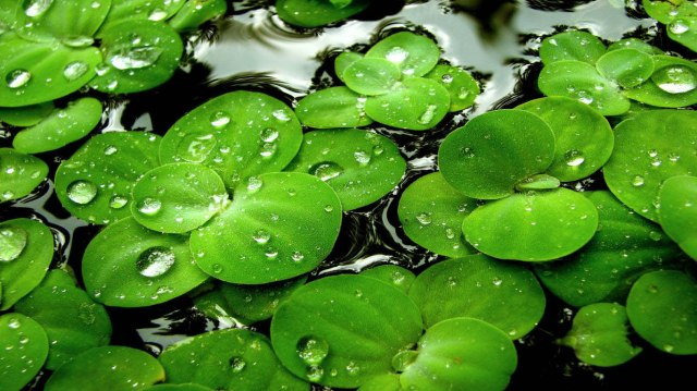 water drops leaves