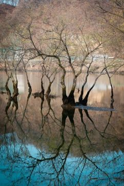 trees-reflected