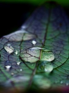 leaf-water-drop