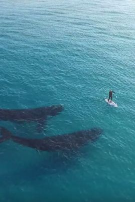 whales paddler