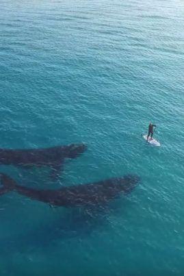 whales paddler