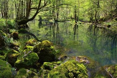 kocevski-Slovenia forest