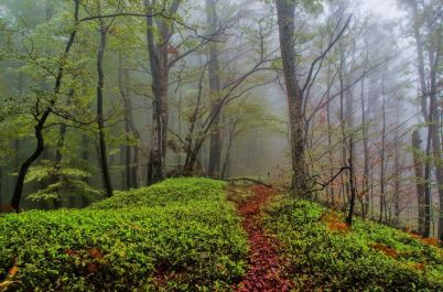 Slovenia forest