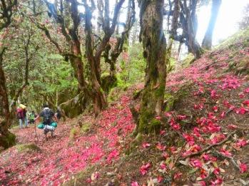 Trekking and Hiking in Bhutan