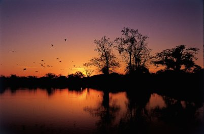 Amazon-brazil sunset