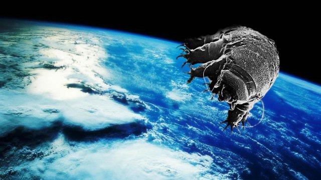 tardigrades_in_space copy