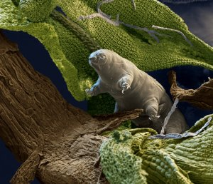 water bear02 copy