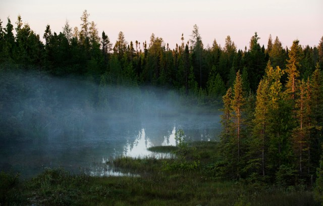 Boreal Forest mist