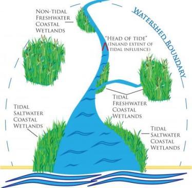 coastal wetland illustration
