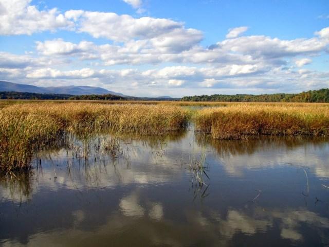 Hudson River wetland