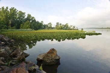 HudsonRiver-marsh