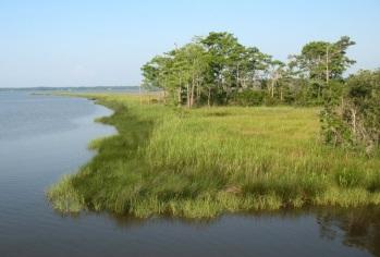 weeksbay-marsh