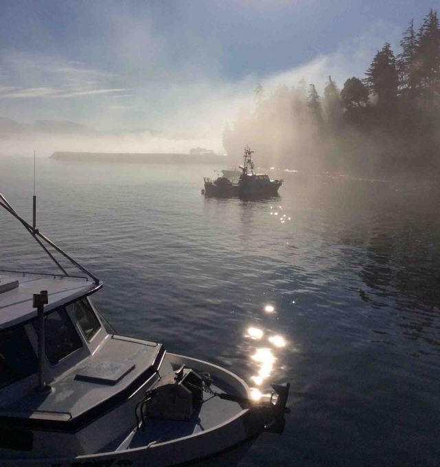 PortRenfrew boats in mist