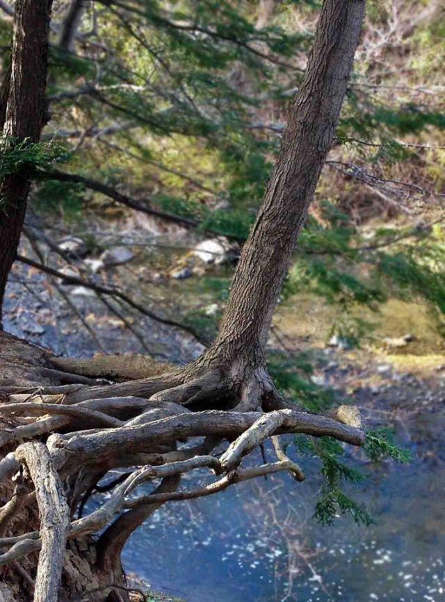TreeOverhang HighlandCreek