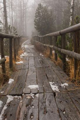 winter bridge forest