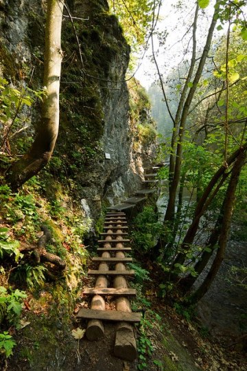 forest cliff path