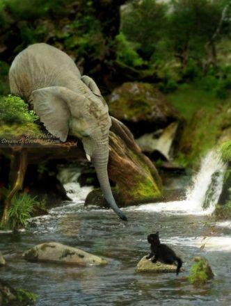elephant kitten stream