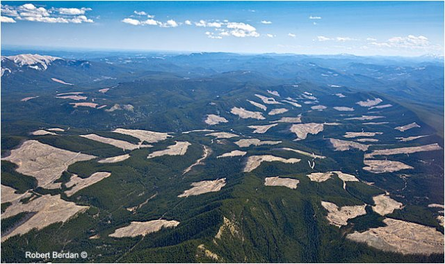 clearcutting in CanadianRockies