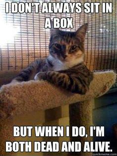 schrodingers cat-cool