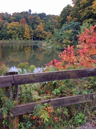 Pond-forest-Sumac