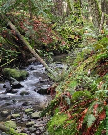 Rainforeset Stream-2012