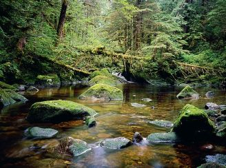 stream oldgrowth forest