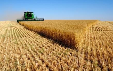Monocrop harvest