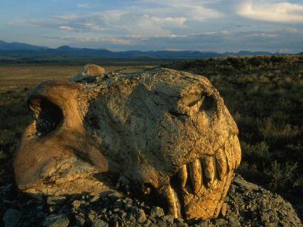 dinogorgon_south africa