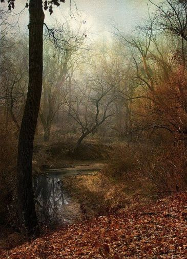 fall stream trees mist copy