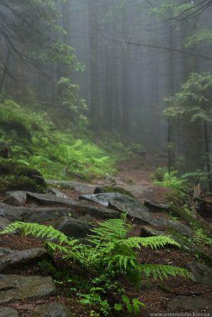 fern forest mist