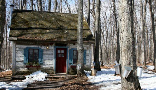 maplesyrup sugar shack