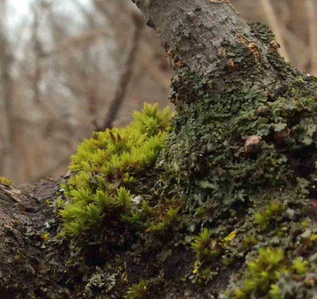 Winter moss-close
