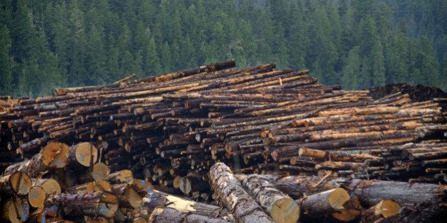 Canada logging