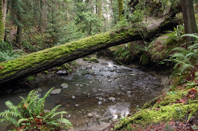 Fallen log BC rainforest