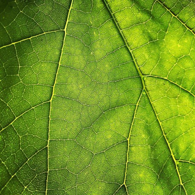 Leaf by Maros Misove